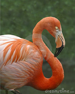 pink-flamingo-5082605